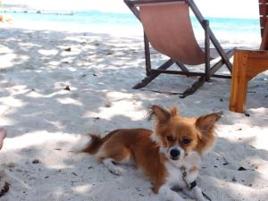 Sachi in total relaxation on the cool sand