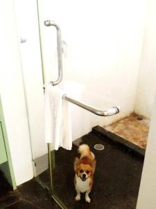 bathroom, pet-friendly hotel, thailand,  centara chantalay