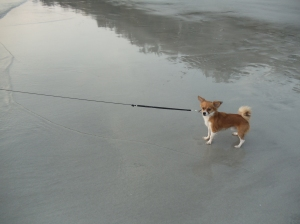Sachi's first time at the beach. Notice the resistance :)