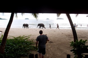 Baby elephants walking by, it was such a cool sight to see and capture :)